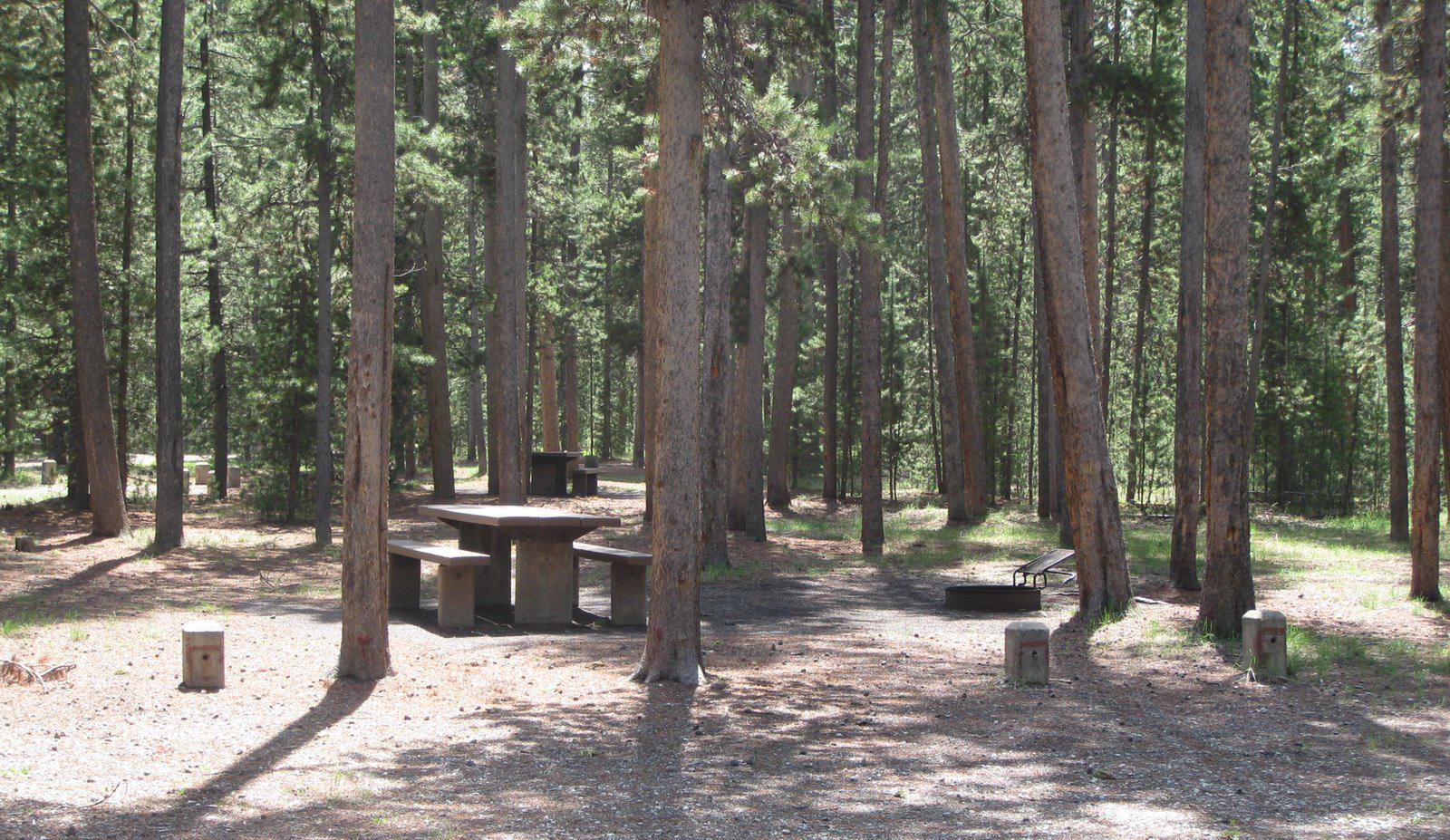 Site B19, surrounded by pine trees, picnic table & fire ringSite B19