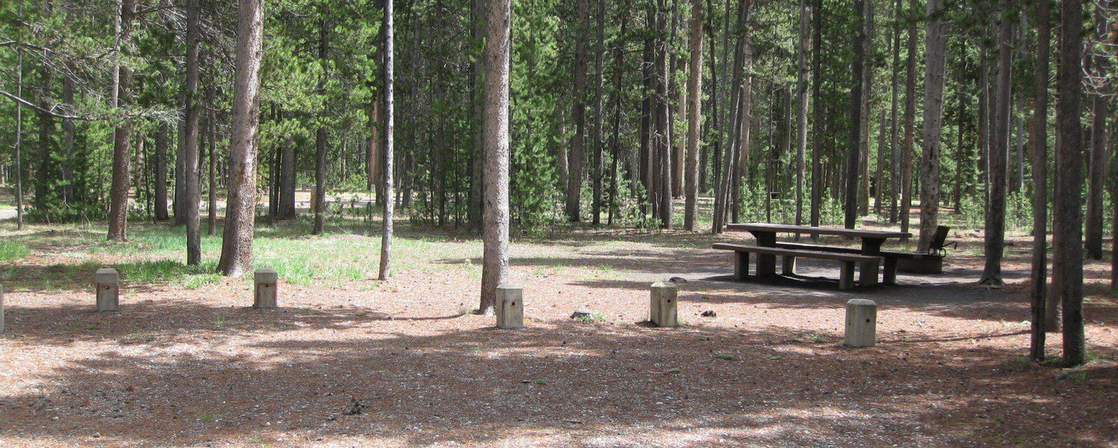Site B2, surrounded by pine trees, picnic table & fire ringSite B2