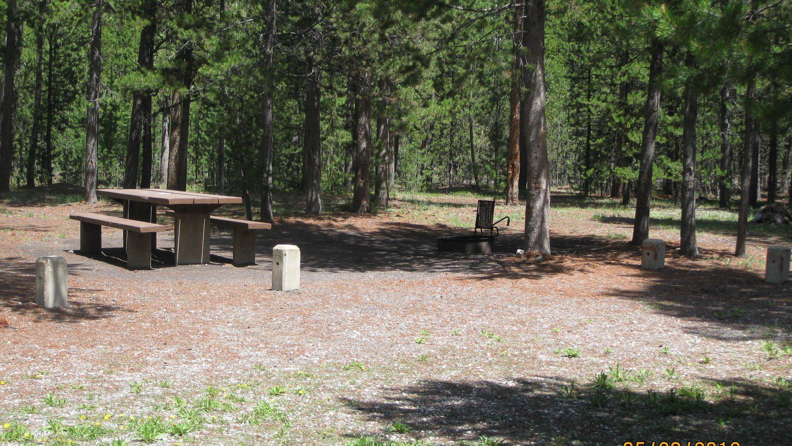 Site B20, surrounded by pine trees, picnic table & fire ringSite B20