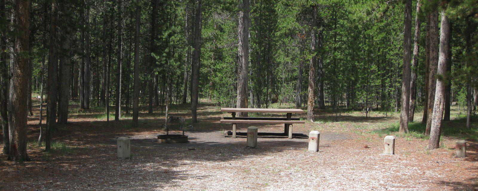 Site B3, surrounded by pine trees, picnic table & fire ringSite B3