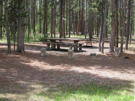 Site B6, surrounded by pine trees, picnic table & fire ringSite B6