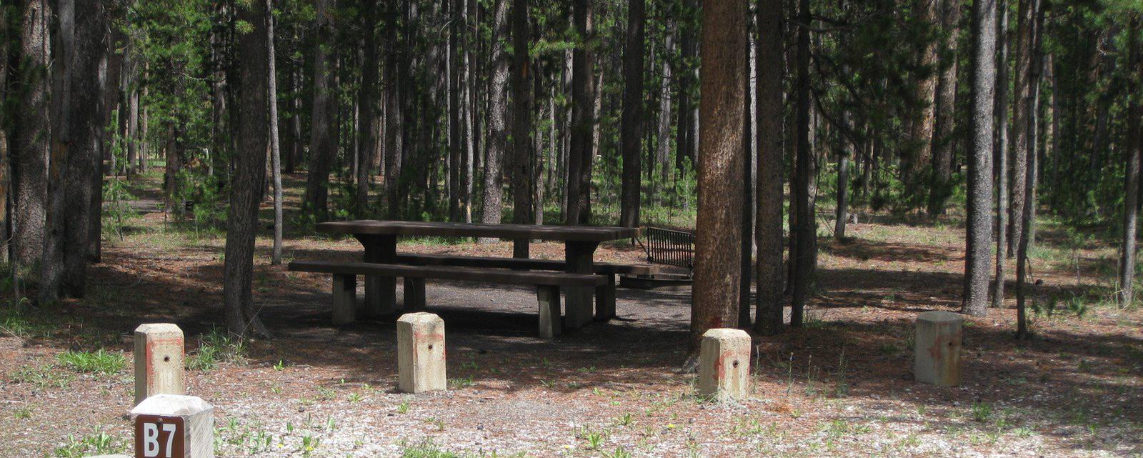Site B7, surrounded by pine trees, picnic table & fire ringSite B7
