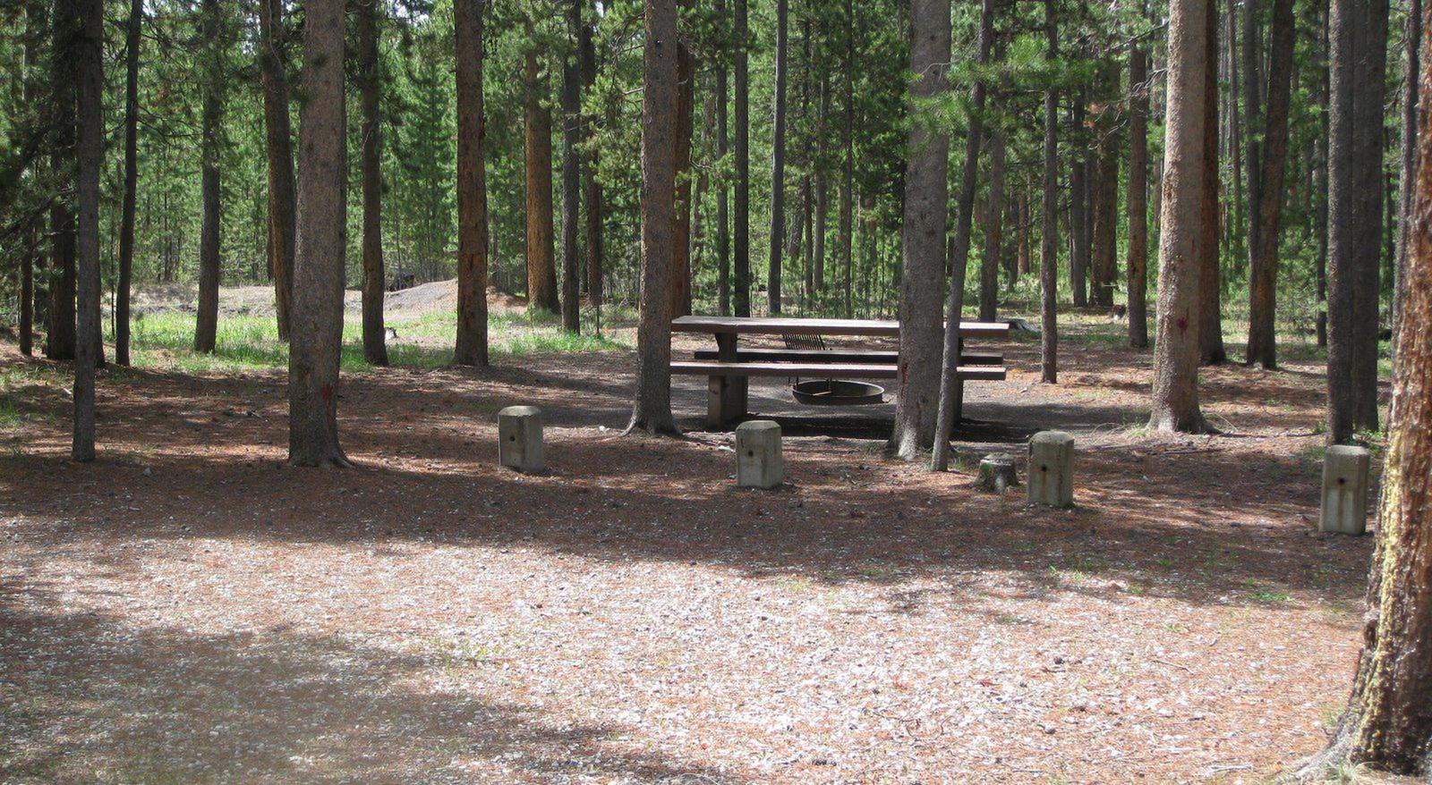 Site B8, surrounded by pine trees, picnic table & fire ringSite B8