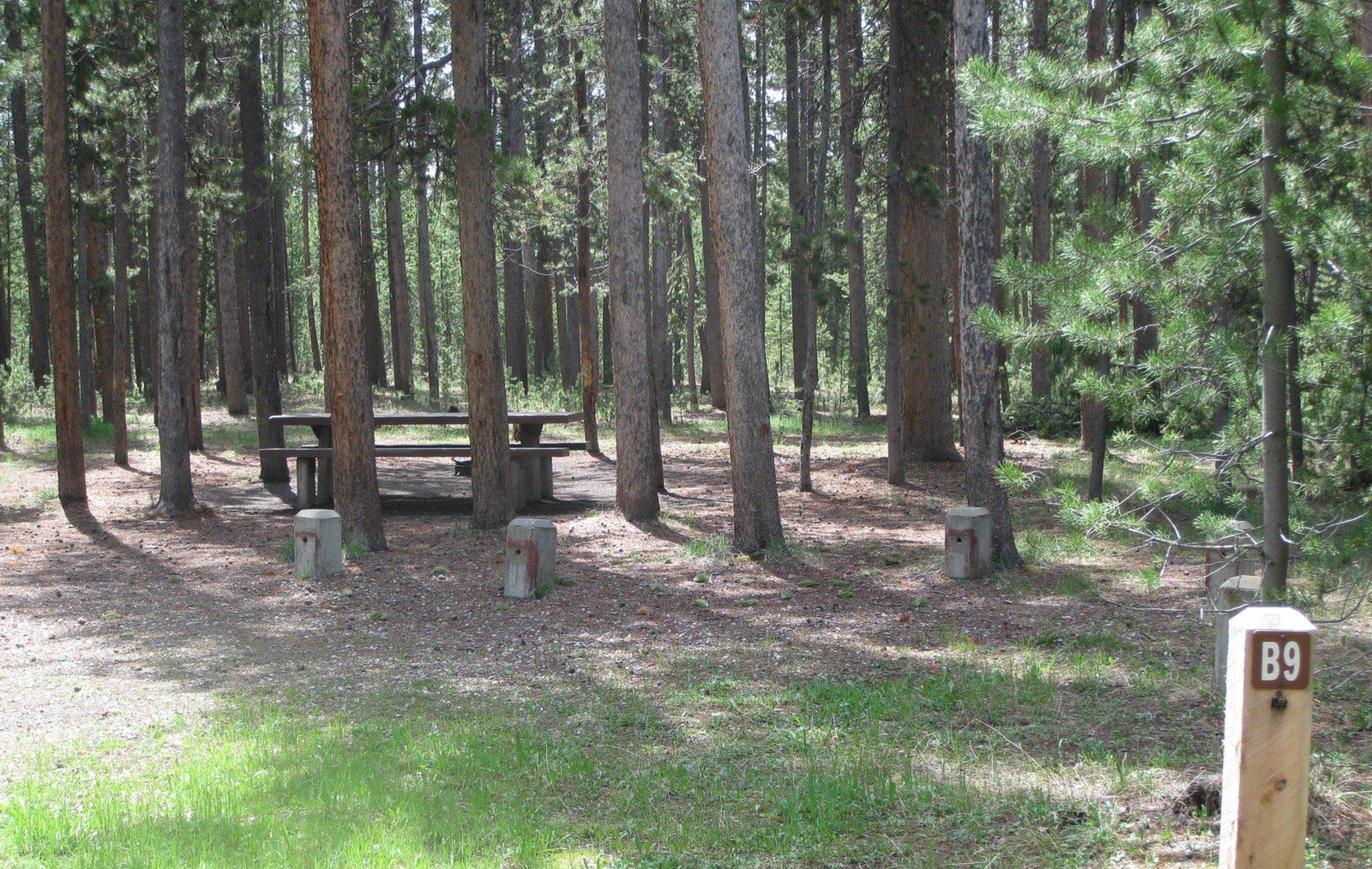Site B9, surrounded by pine trees, picnic table & fire ringSite B9