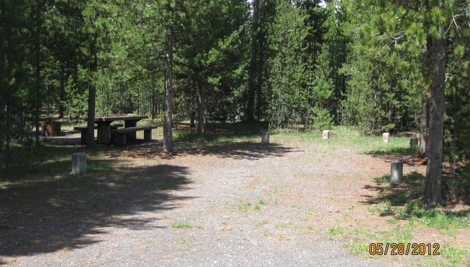 Site C1, surrounded by pine trees, picnic table & fire ringSite C1