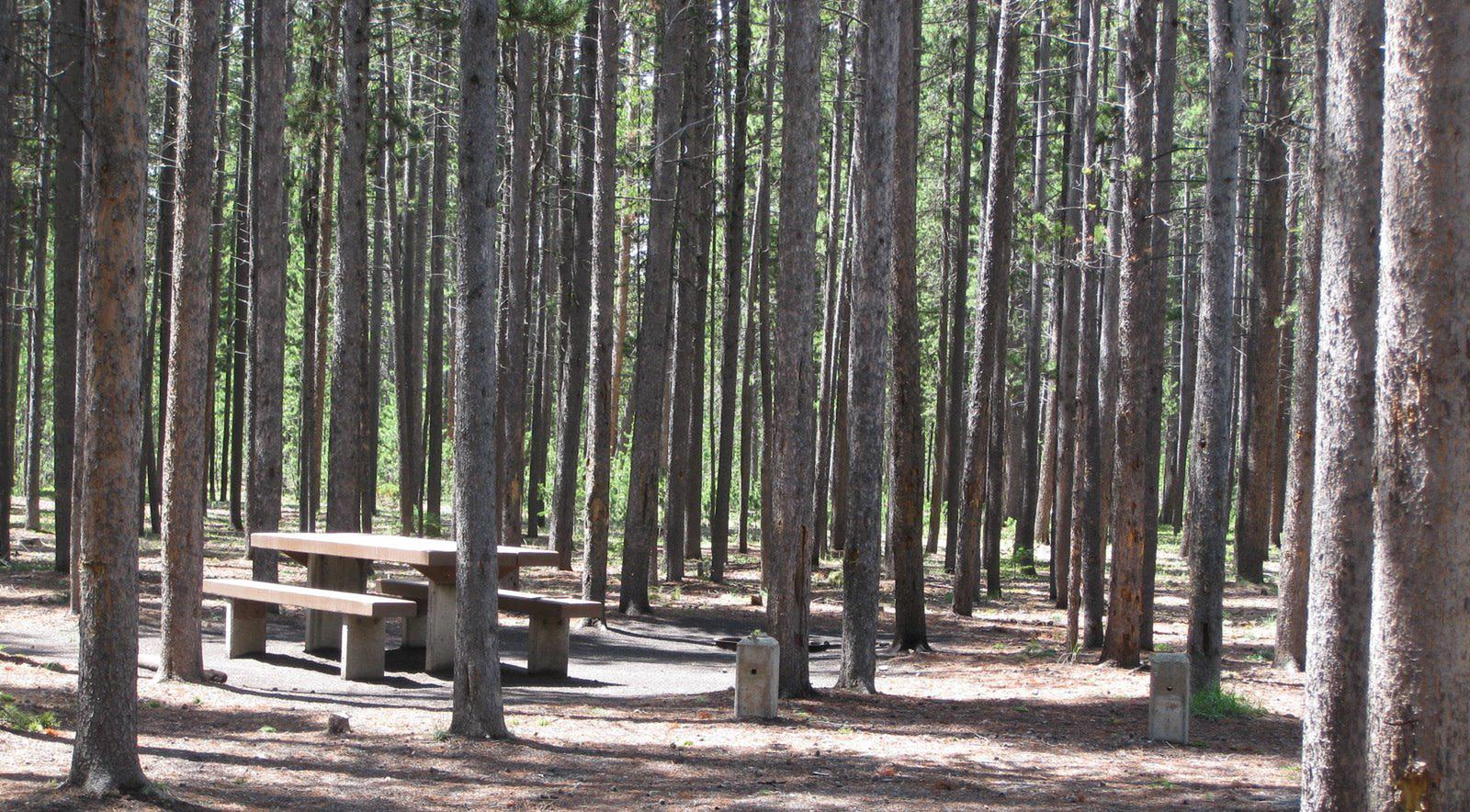 Site C10, surrounded by pine trees, picnic table & fire ringSite C10