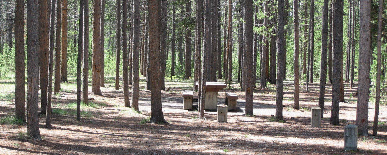 Site C12, surrounded by pine trees, picnic table & fire ringSite C12