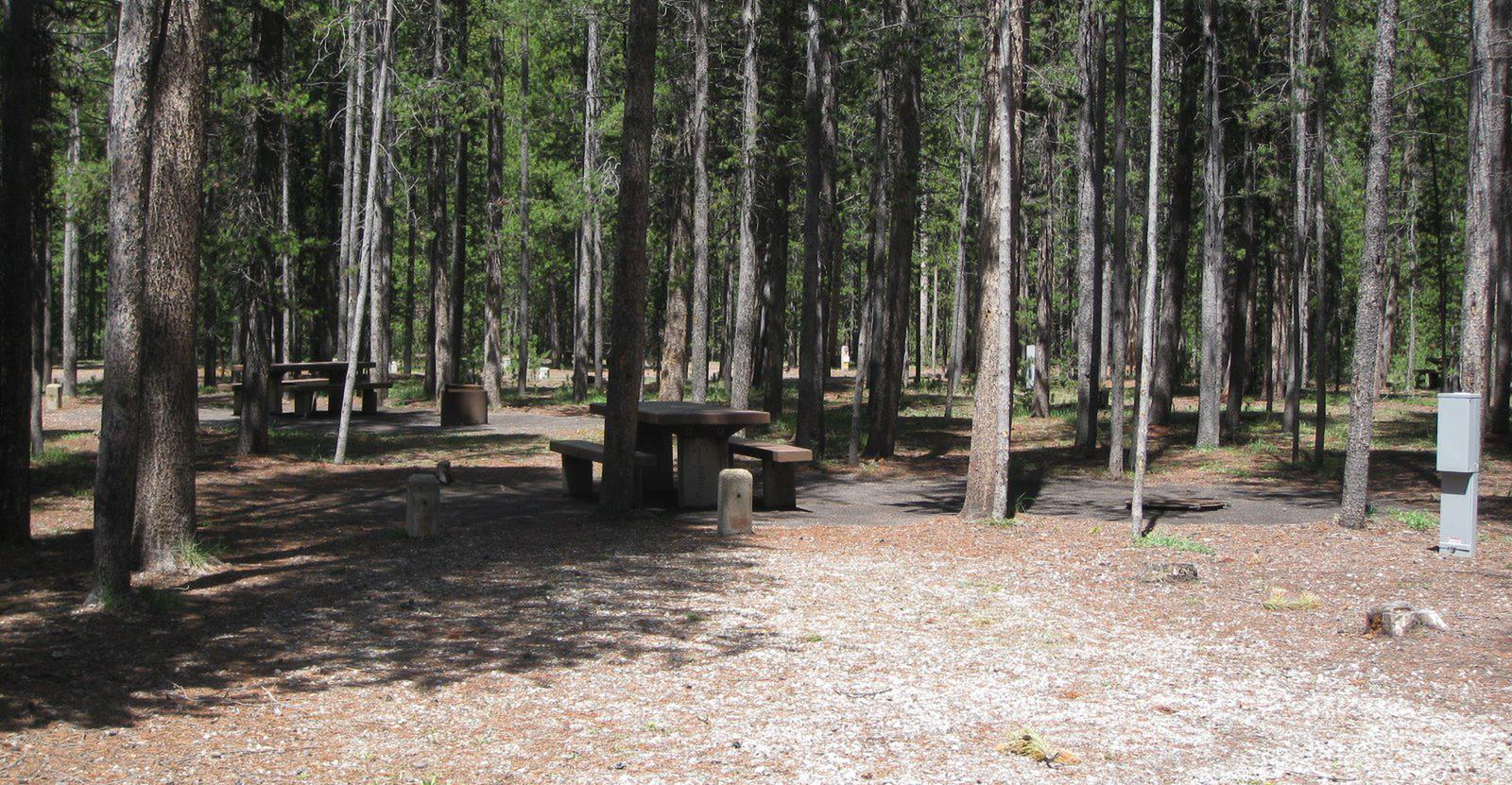 Site C13, surrounded by pine trees, picnic table & fire ringSite C13