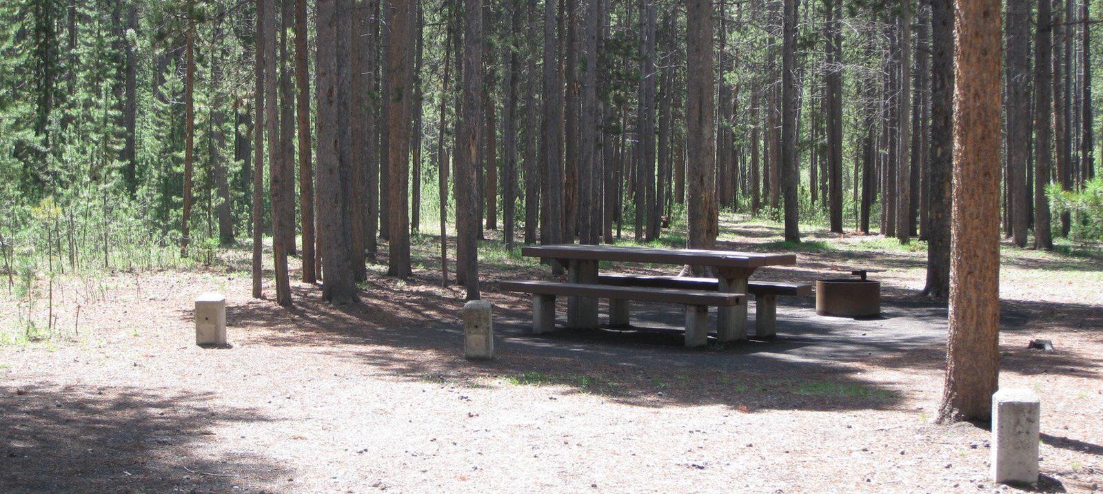 Site C15, surrounded by pine trees, picnic table & fire ringSite C15