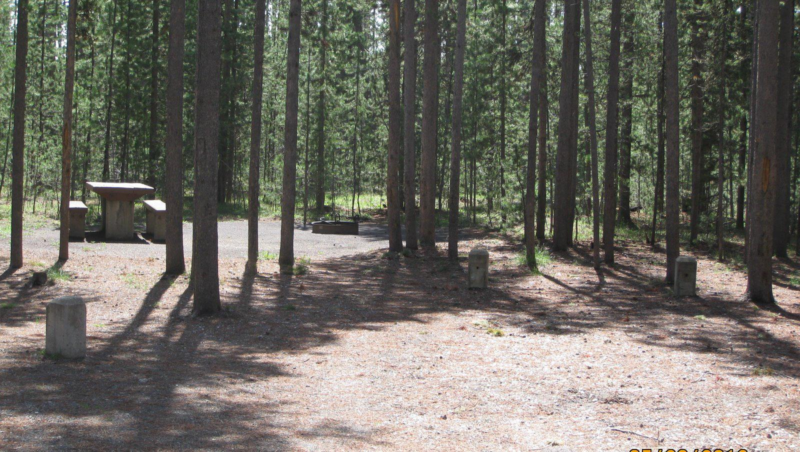 Site C16, surrounded by pine trees, picnic table & fire ringSite C16