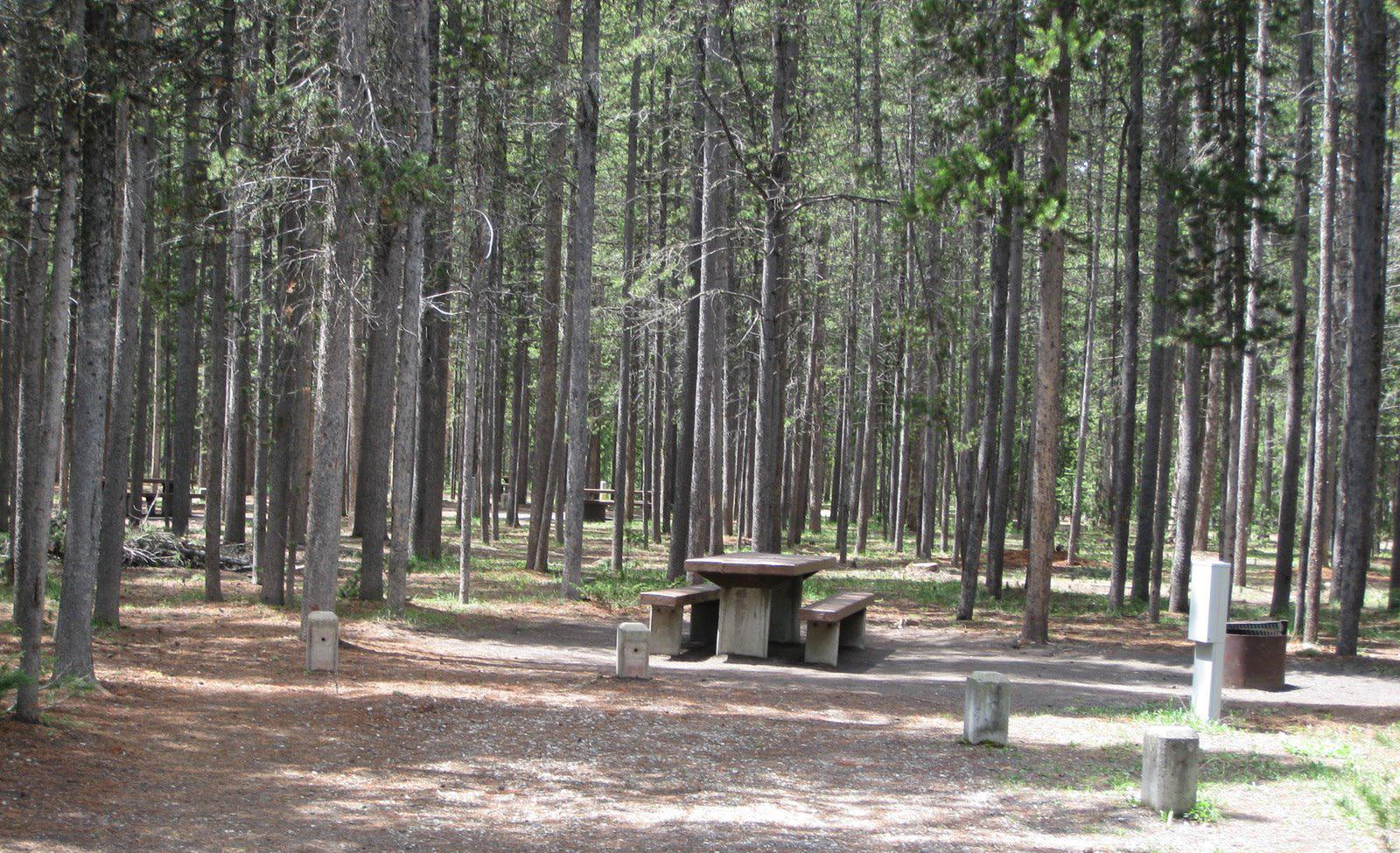 Site C18, surrounded by pine trees, picnic table & fire ringSite C18
