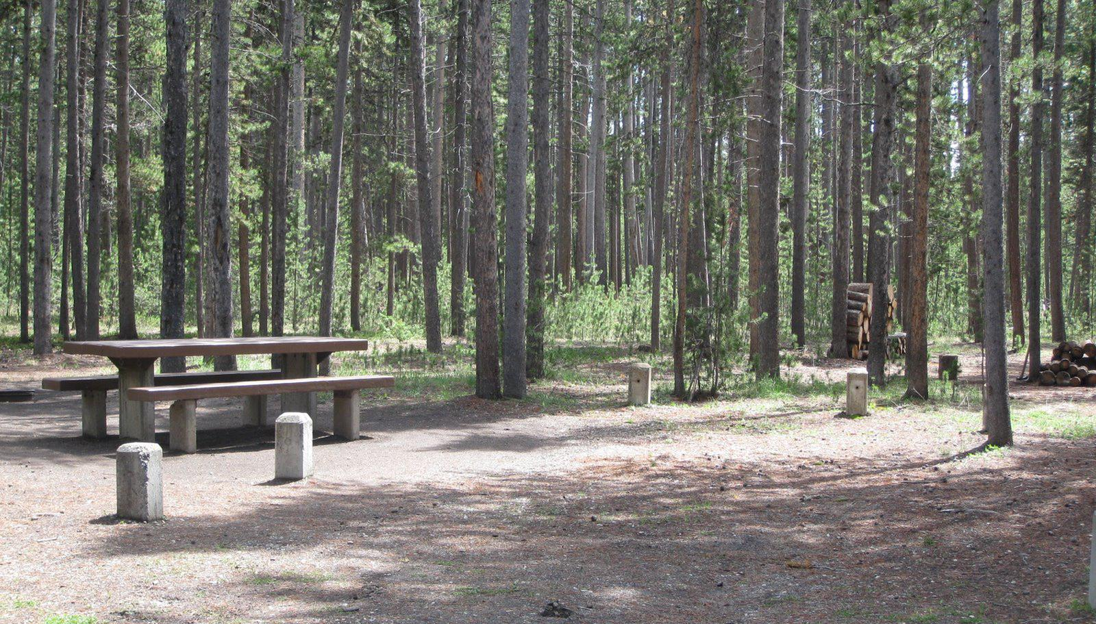 Site C19, surrounded by pine trees, picnic table & fire ringSite C19