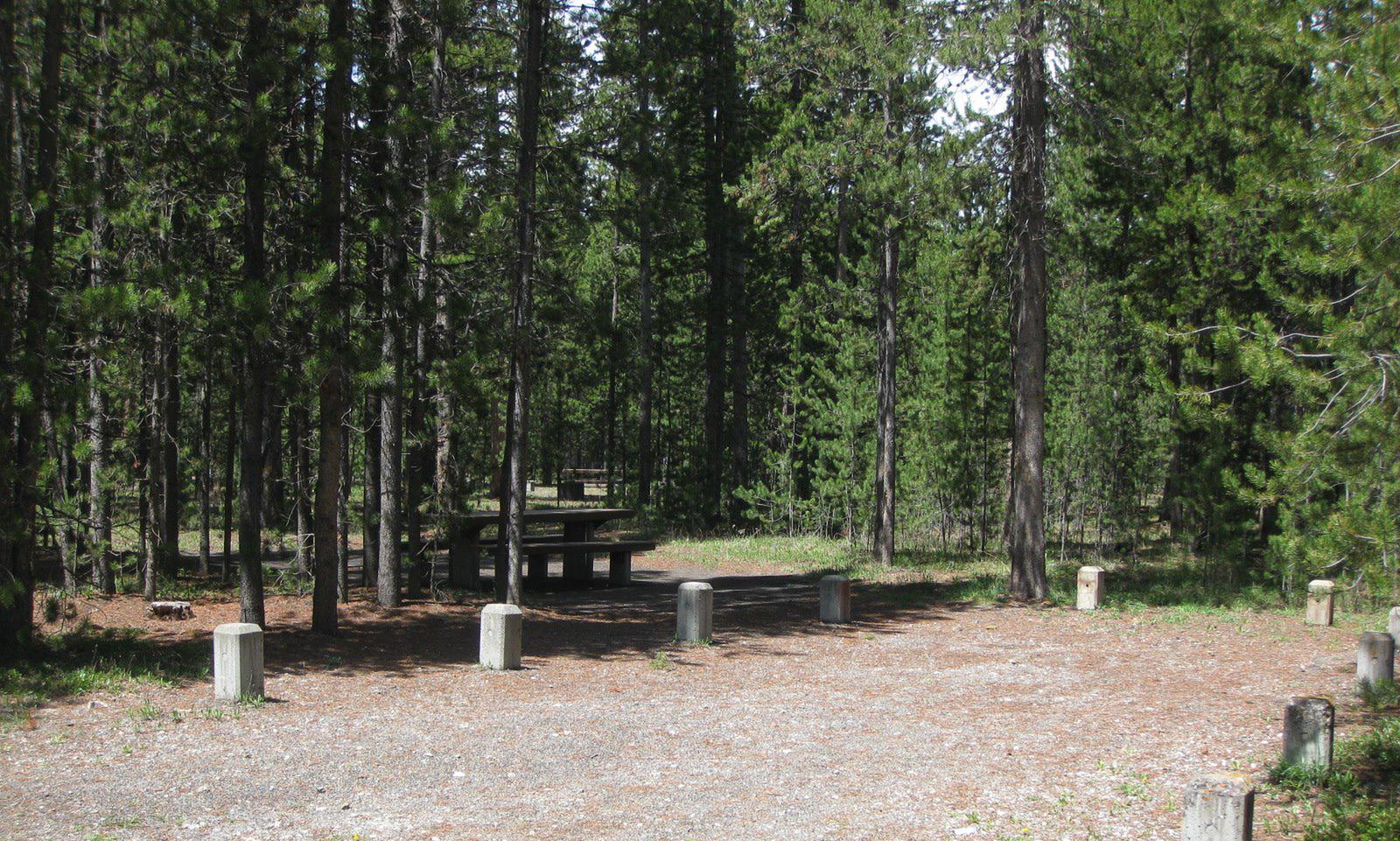 Site C2, surrounded by pine trees, picnic table & fire ringSite C2