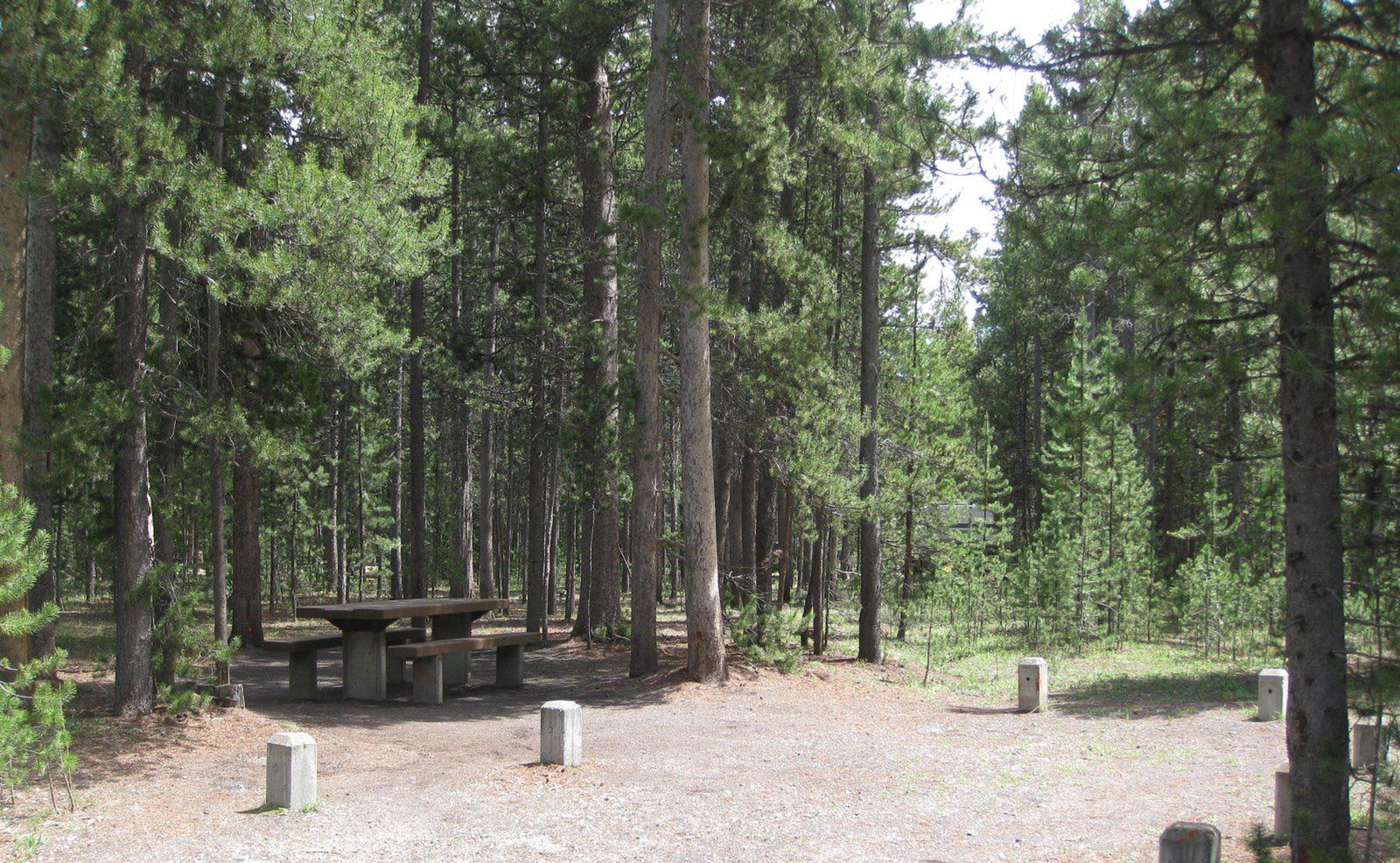 Site C20, surrounded by pine trees, picnic table & fire ringSite C20