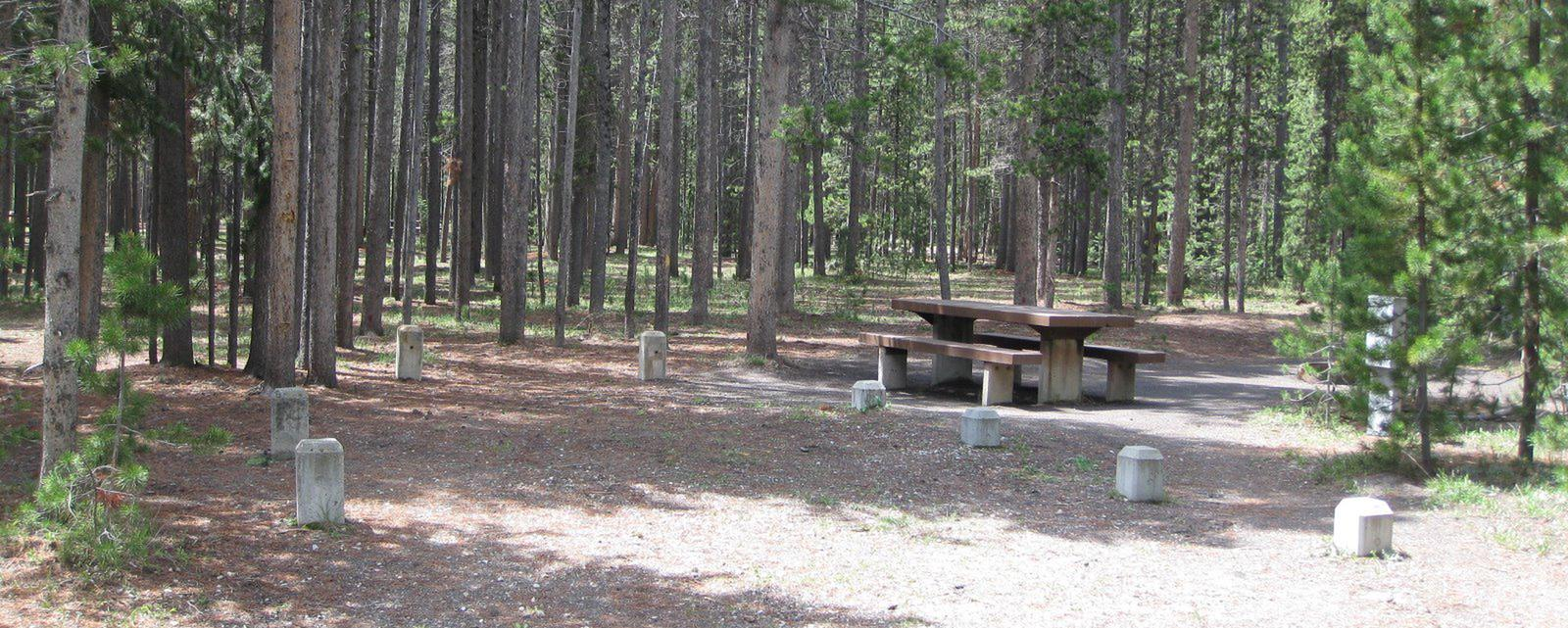 Site C21, surrounded by pine trees, picnic table & fire ringSite C21