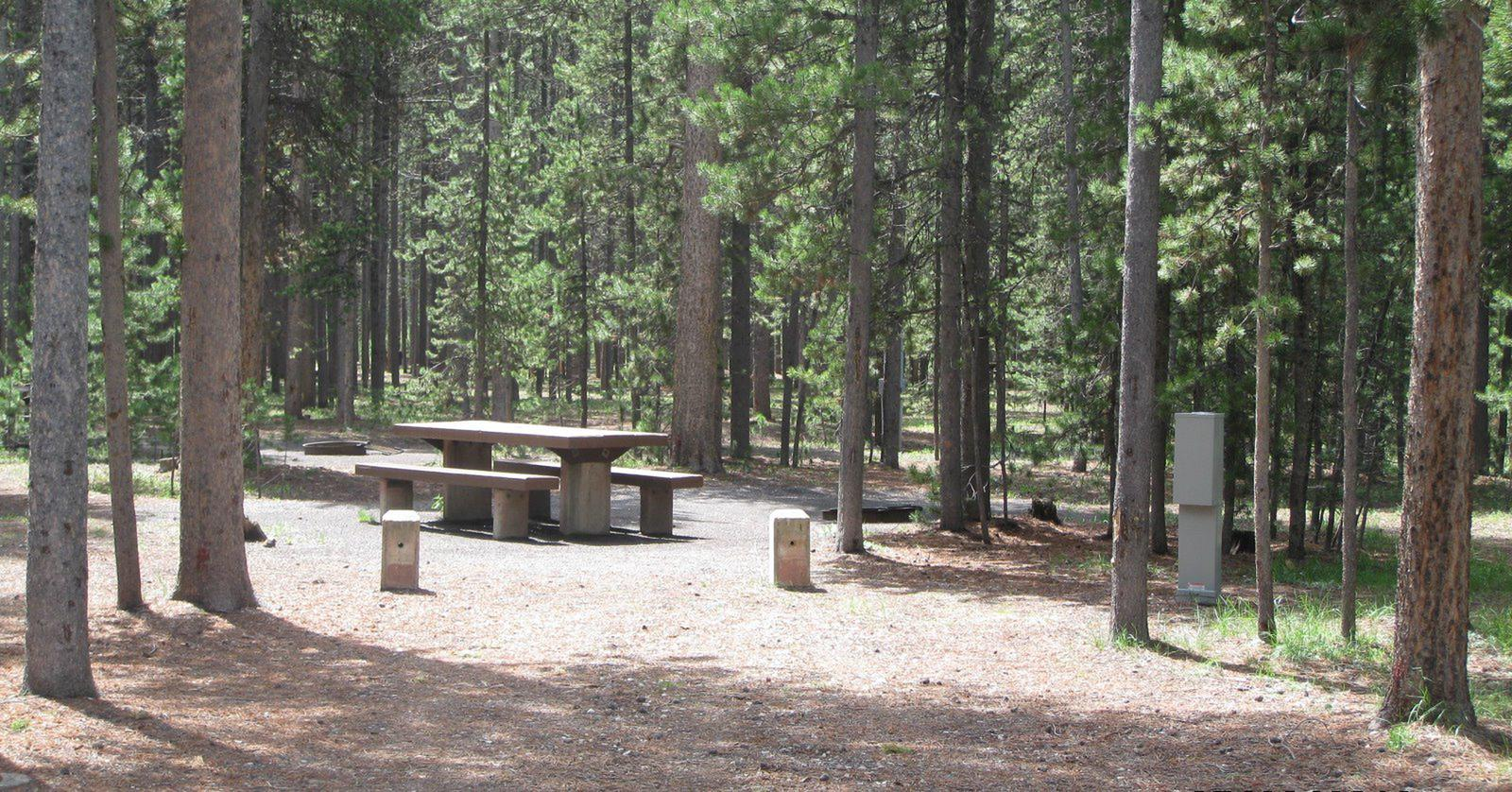 Site C22, surrounded by pine trees, picnic table & fire ringSite C22