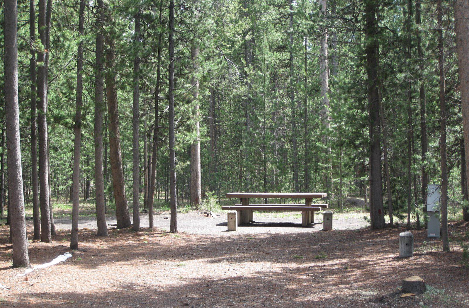 Site C23, surrounded by pine trees, picnic table & fire ringSite C23