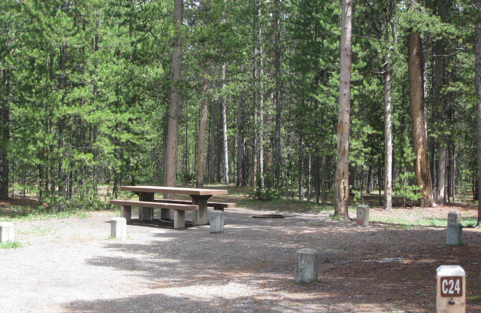 Site C24, surrounded by pine trees, picnic table & fire ringSite C24
