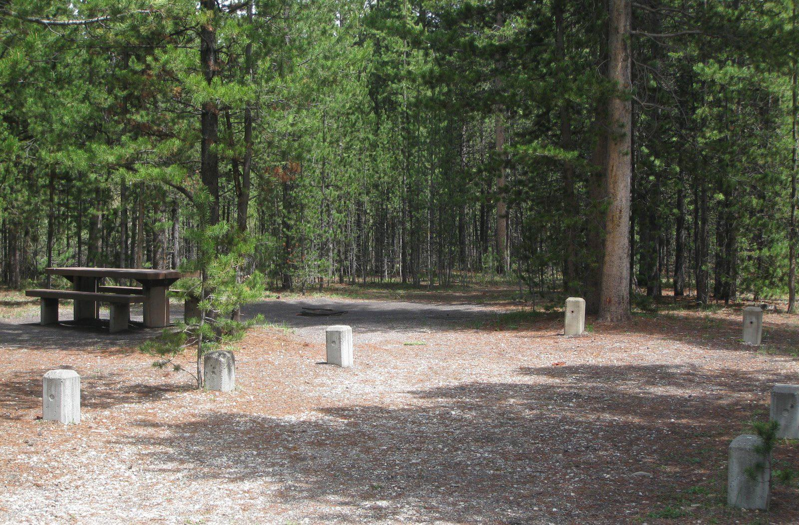 Site C25, surrounded by pine trees, picnic table & fire ringSite C25