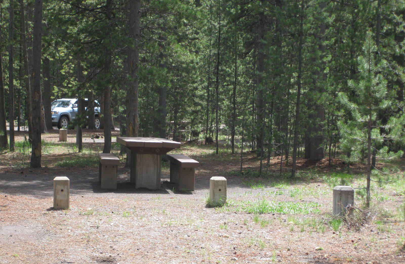 Site C26, surrounded by pine trees, picnic table & fire ringSite C26