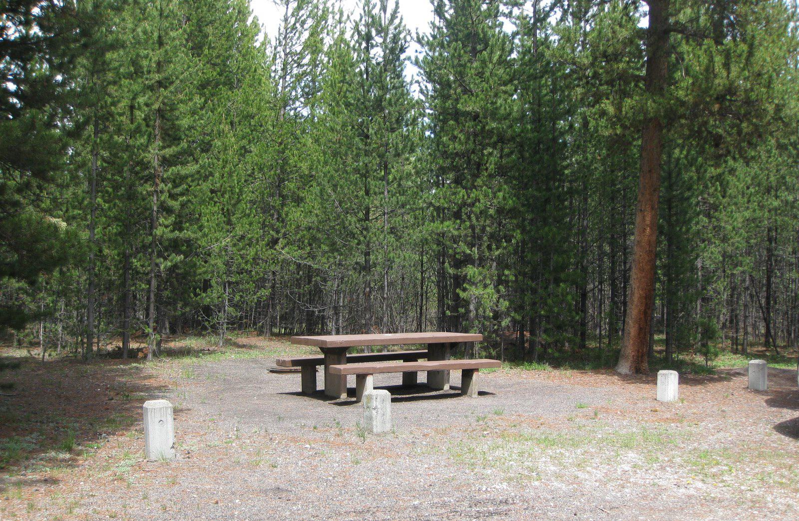 Site C27, surrounded by pine trees, picnic table & fire ringSite C27