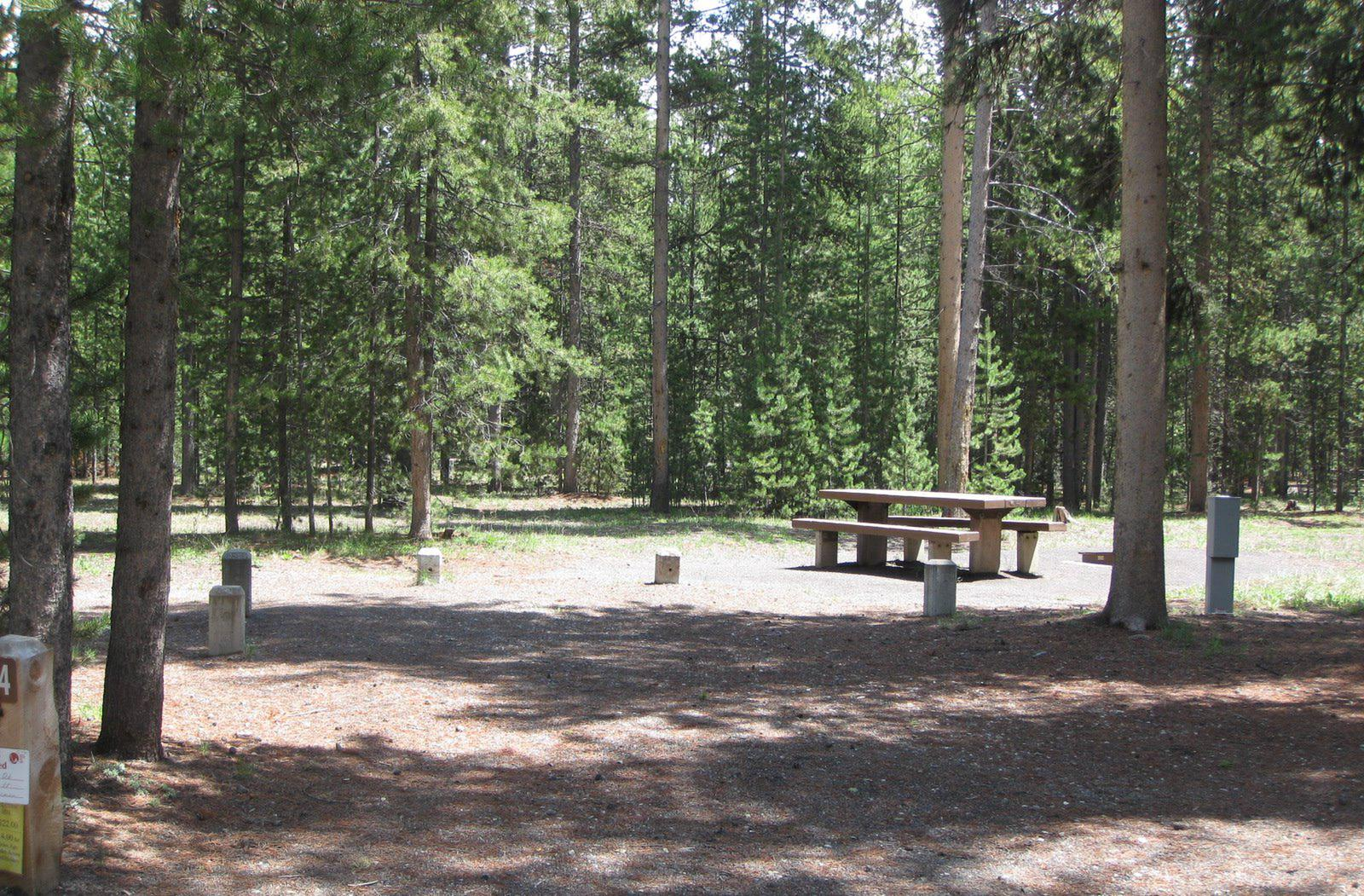 Site C4, surrounded by pine trees, picnic table & fire ringSite C4