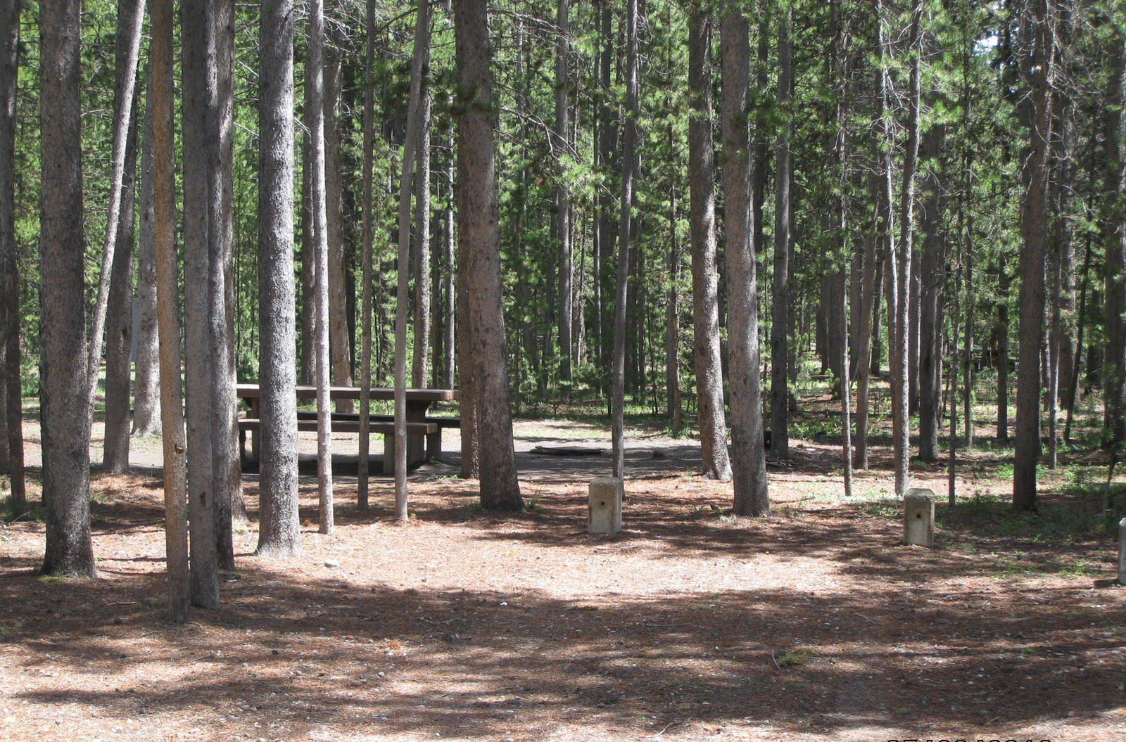 Site C7, surrounded by pine trees, picnic table & fire ringSite C7