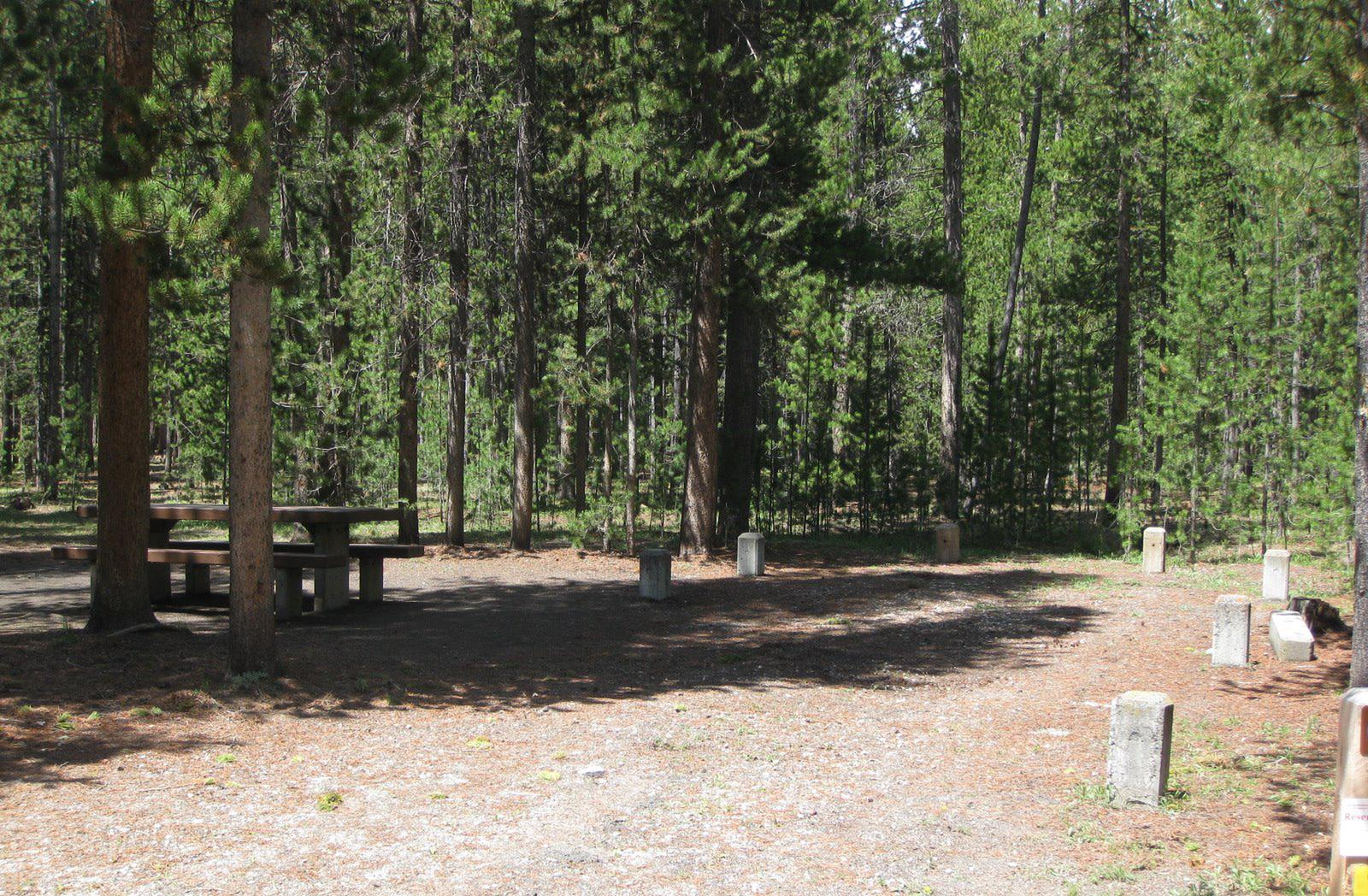 Site C8, surrounded by pine trees, picnic table & fire ringSite C8