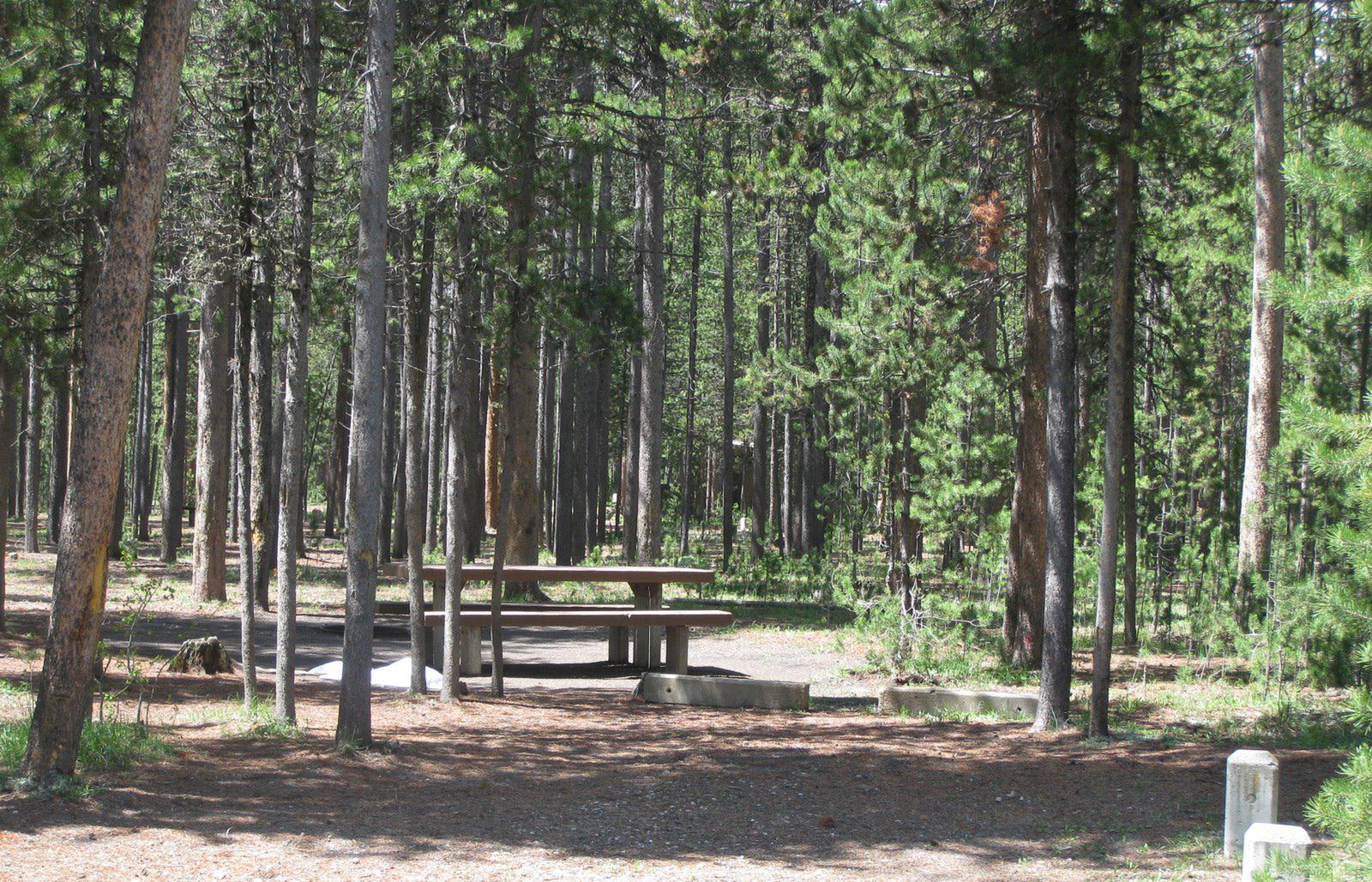 Site C9, surrounded by pine trees, picnic table & fire ringSite C9