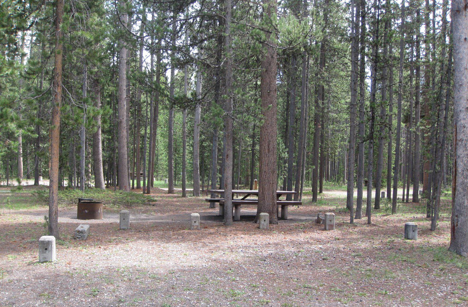 Site D1, surrounded by pine trees, picnic table & fire ringSite D1