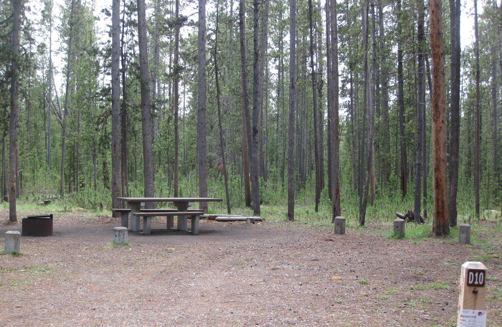 Site D10, surrounded by pine trees, picnic table & fire ringSite D10
