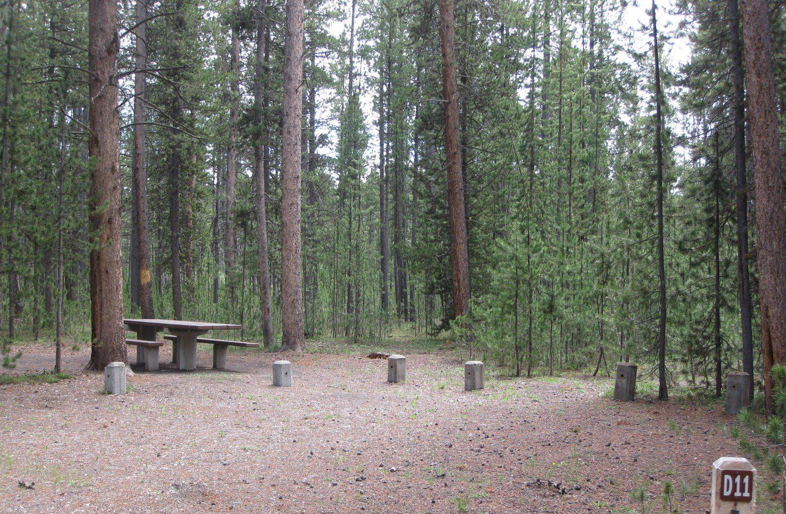 Site D11, surrounded by pine trees, picnic table & fire ringSite D11