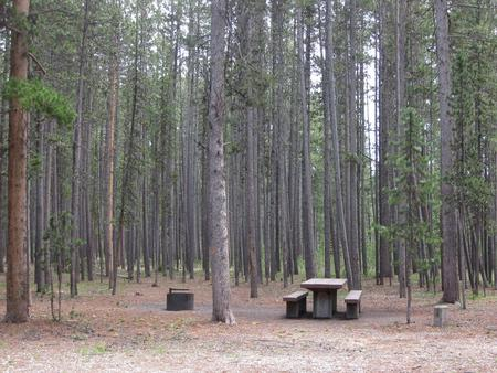 Site D12, surrounded by pine trees, picnic table & fire ringSite D12