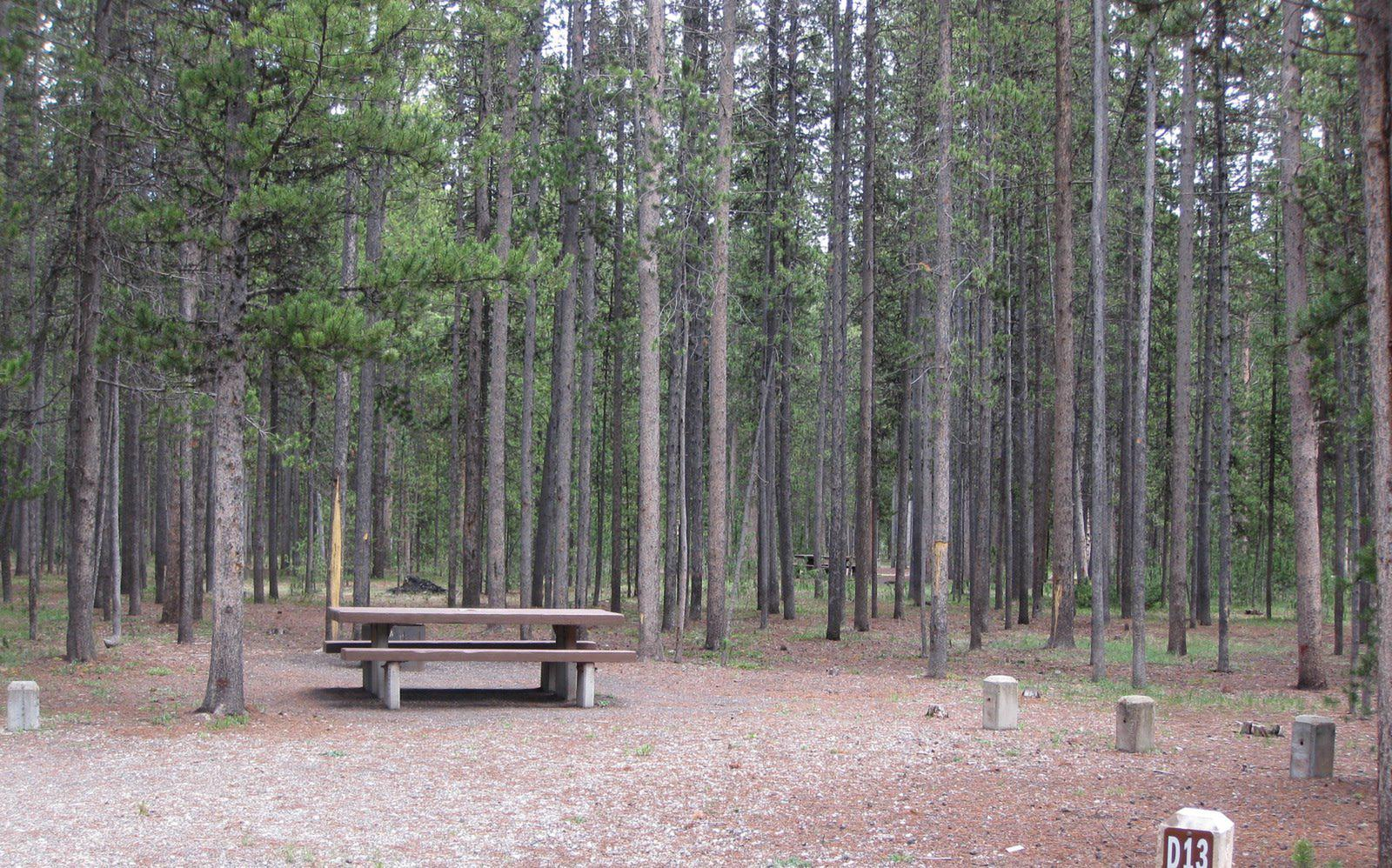Site D13, surrounded by pine trees, picnic table & fire ringSite D13