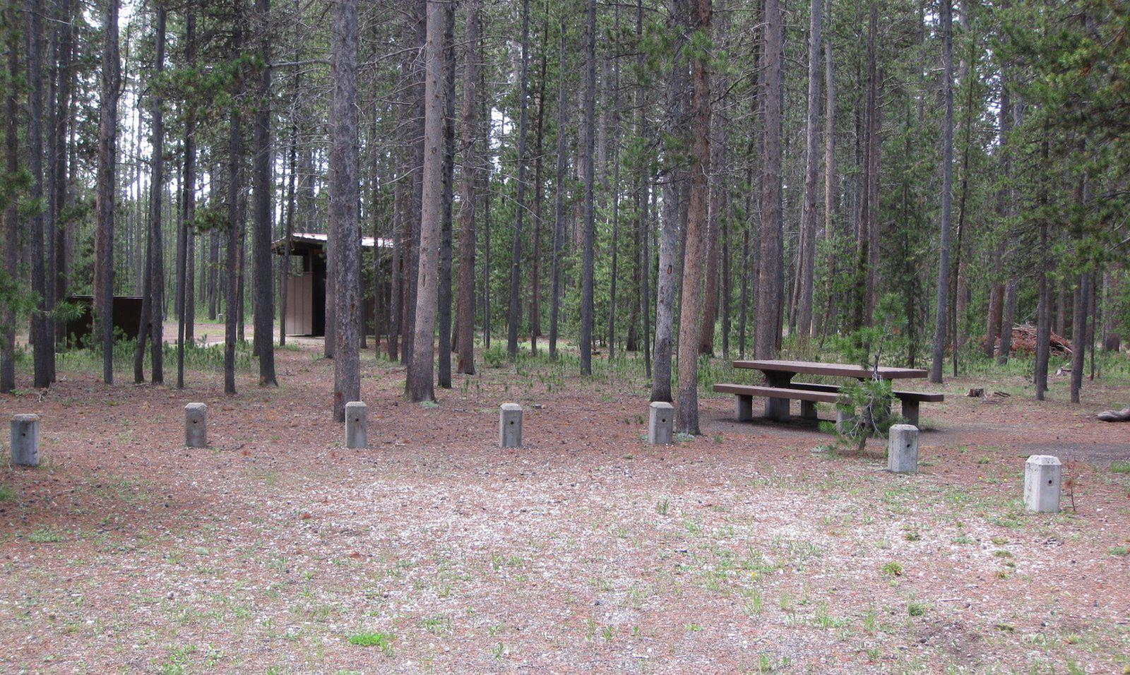 Site D14, surrounded by pine trees, picnic table & fire ringSite D14