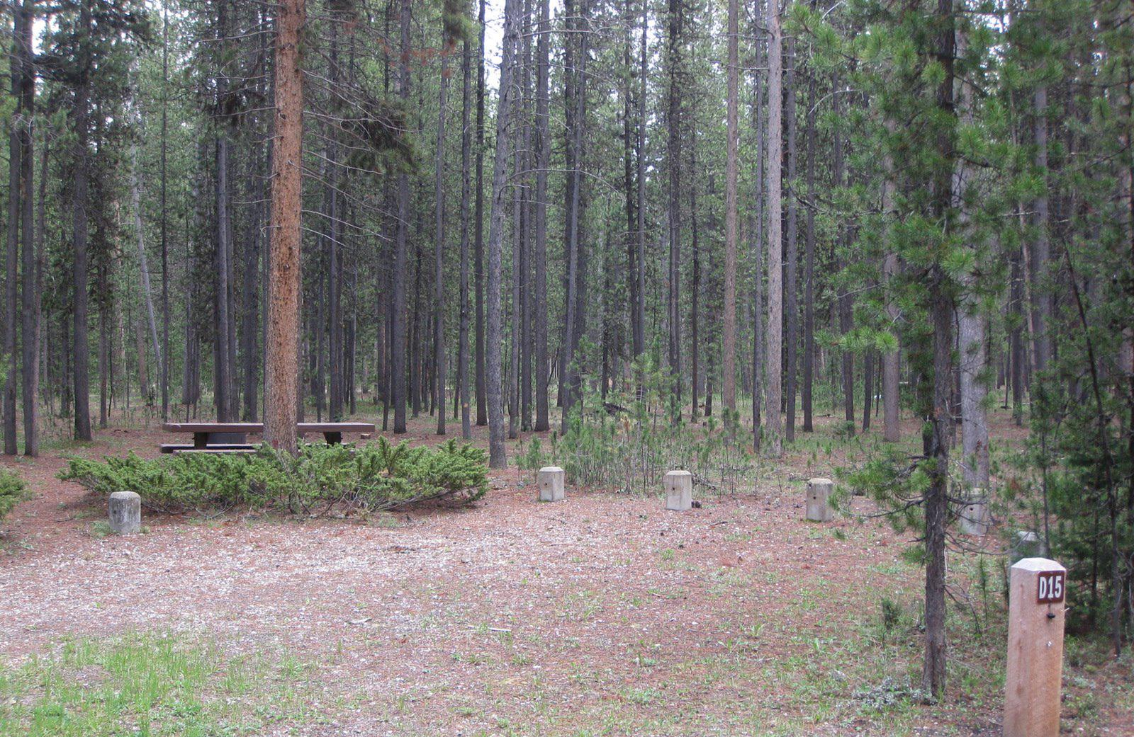 Site D15, surrounded by pine trees, picnic table & fire ringSite D15