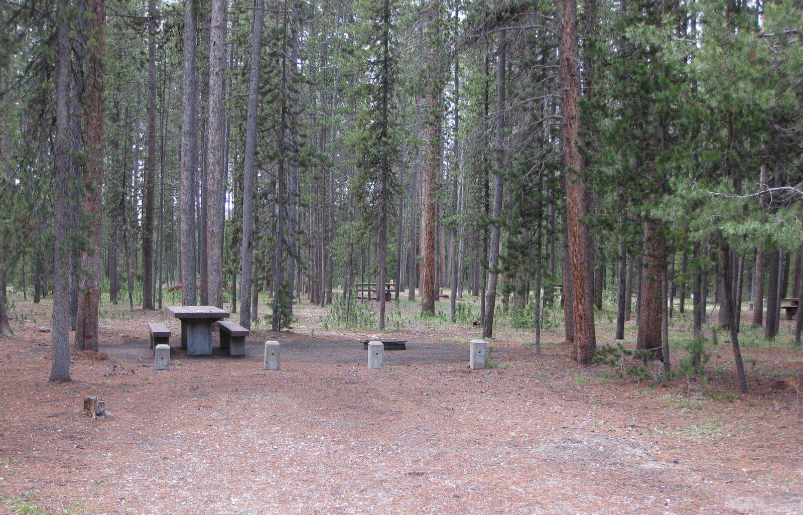 Site D16, surrounded by pine trees, picnic table & fire ringSite D16