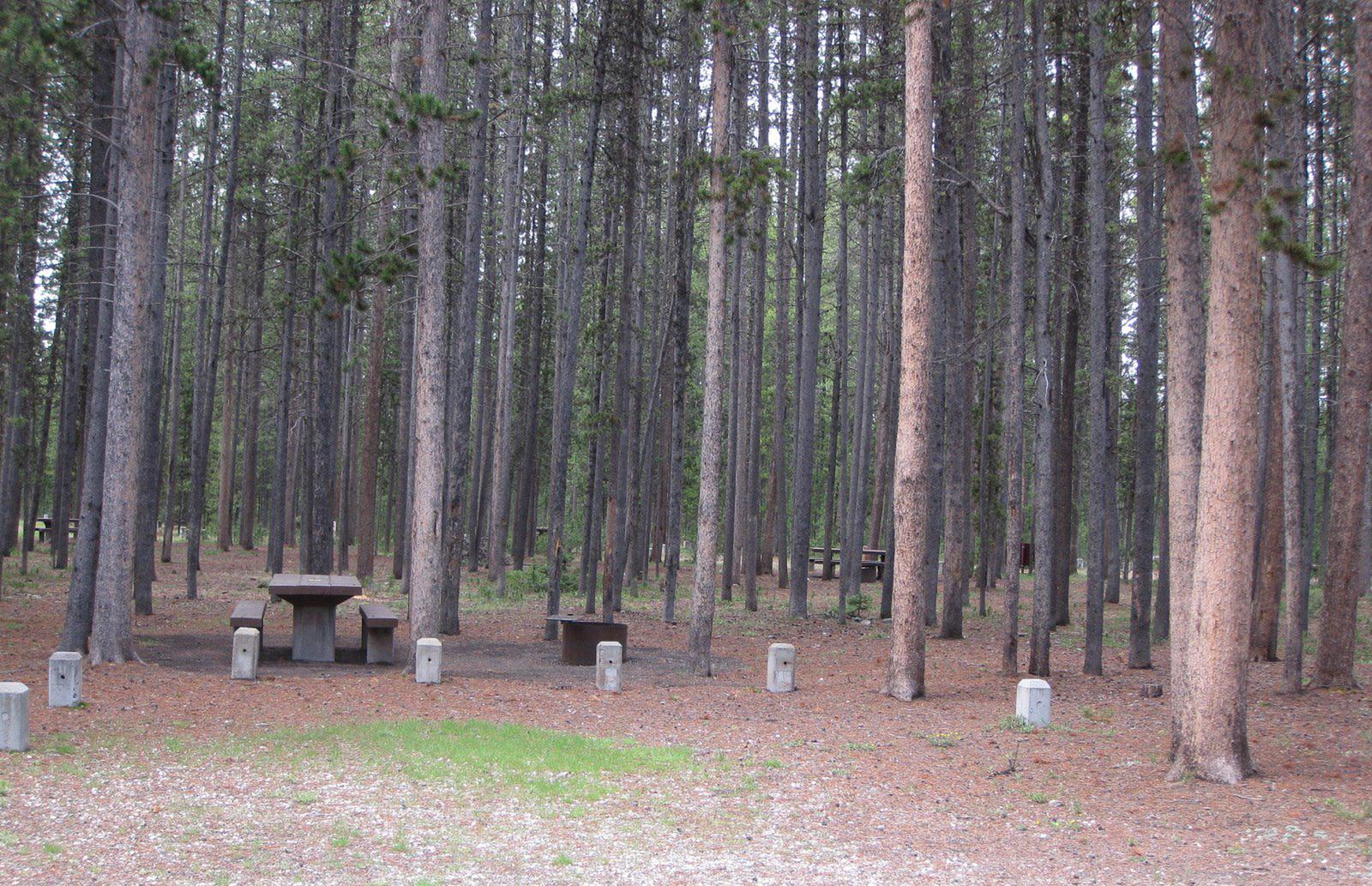 Site D17, surrounded by pine trees, picnic table & fire ringSite D17