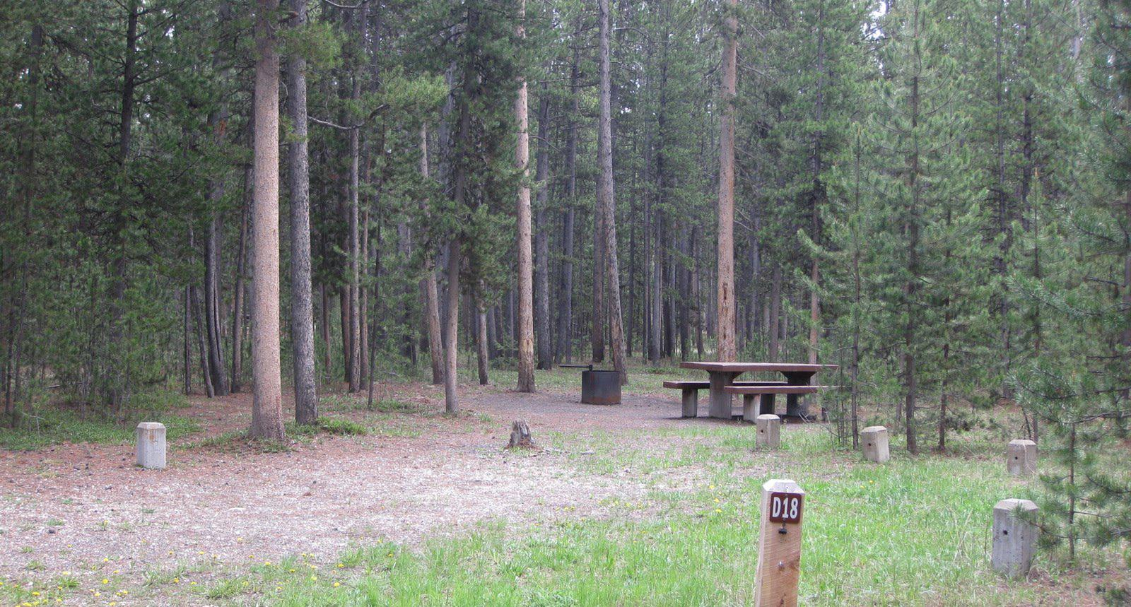Site D18, surrounded by pine trees, picnic table & fire ringSite D18