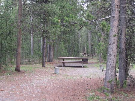 Site D19, surrounded by pine trees, picnic table & fire ringSite D19