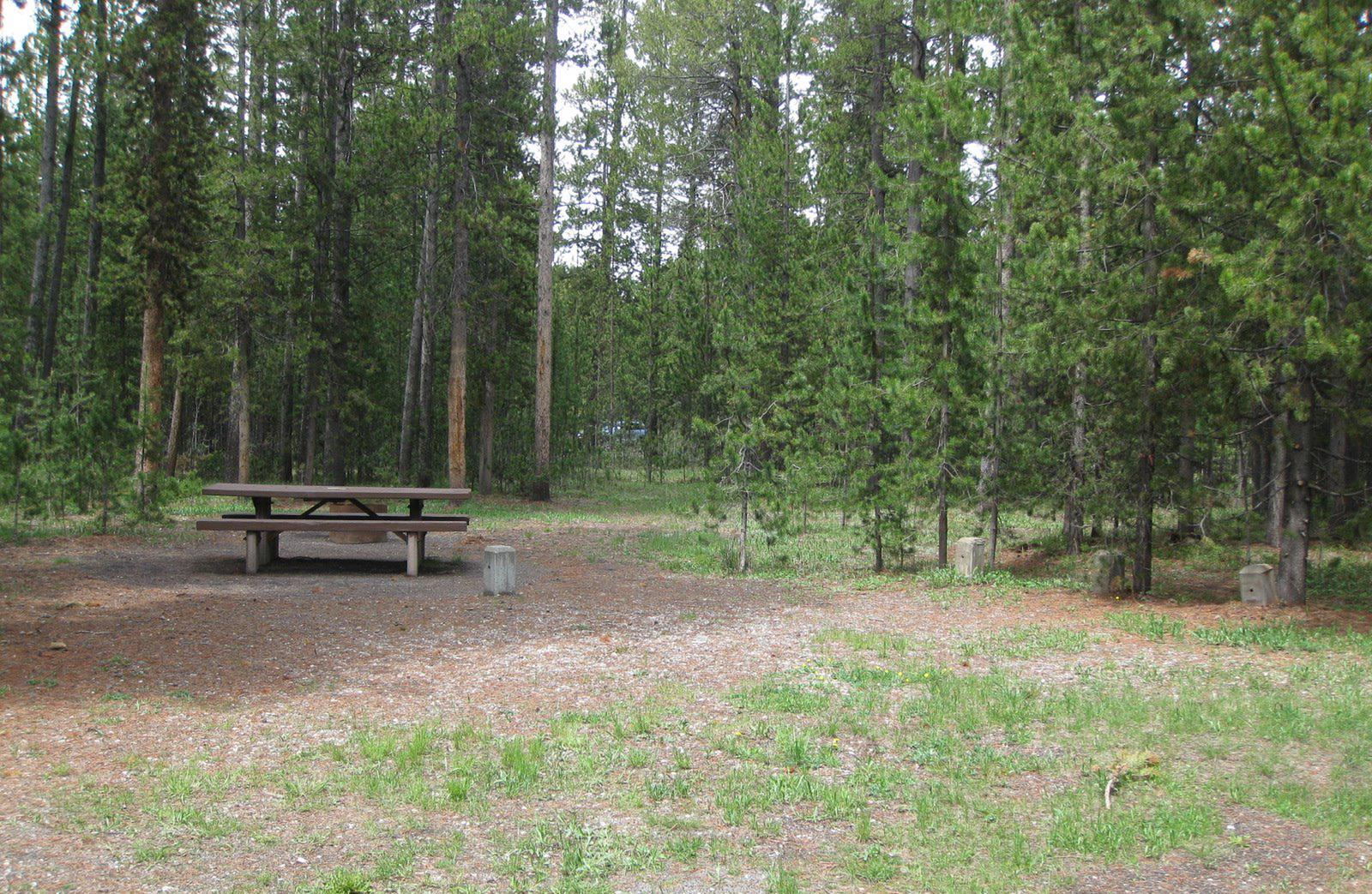 Site D2, surrounded by pine trees, picnic table & fire ringSite D2