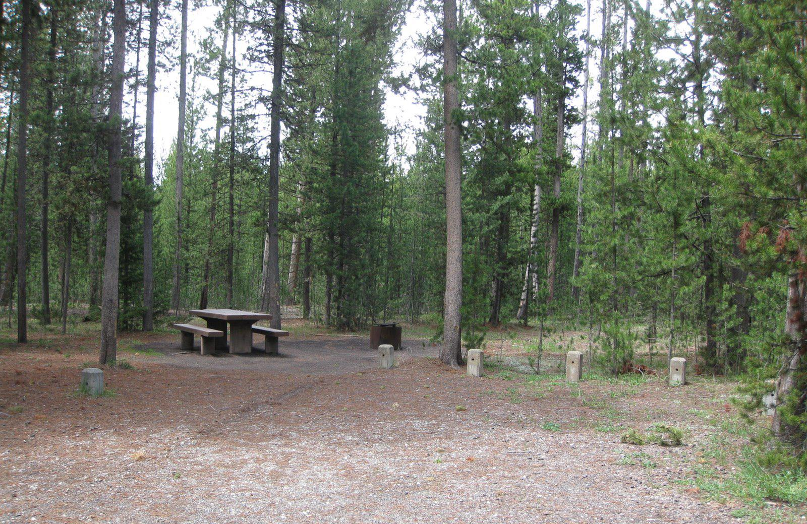 Site D3, surrounded by pine trees, picnic table & fire ringSite D3