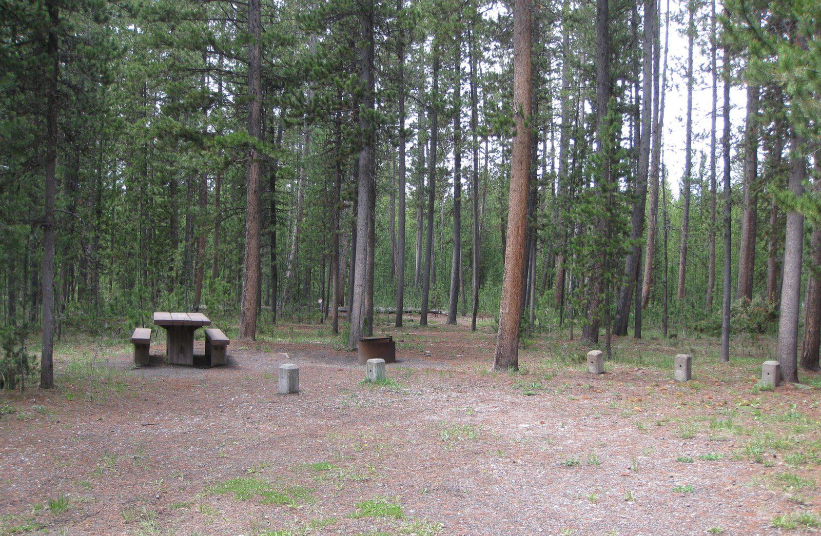 Site D5, surrounded by pine trees, picnic table & fire ringSite D5