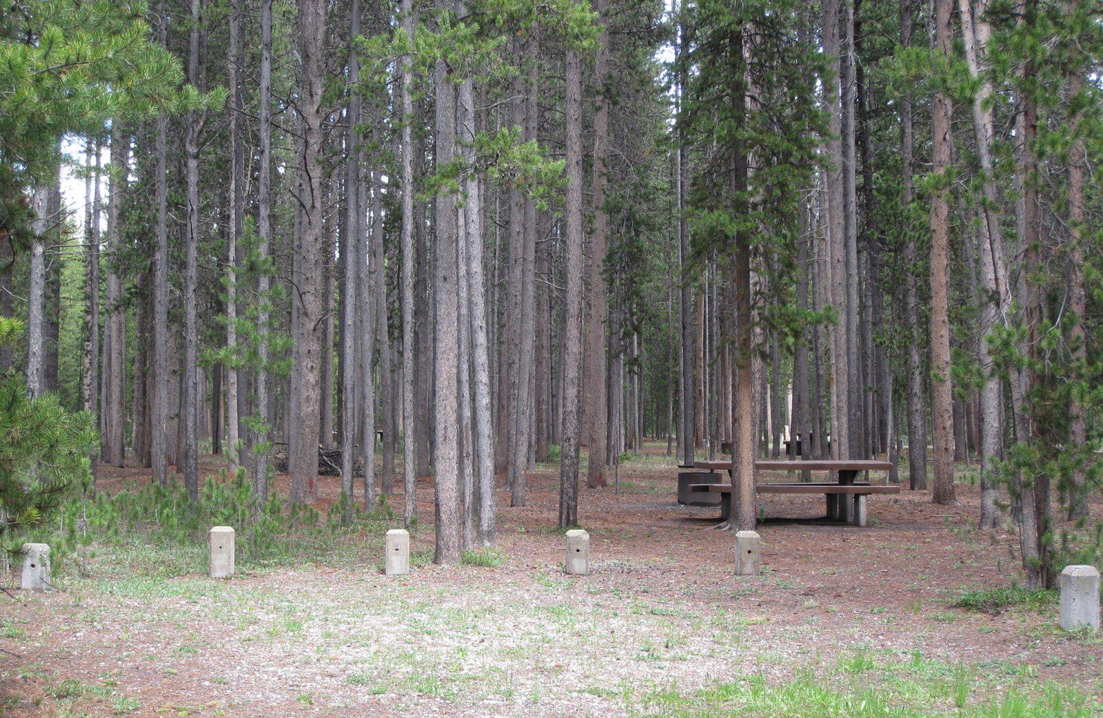 Site D6, surrounded by pine trees, picnic table & fire ringSite D6