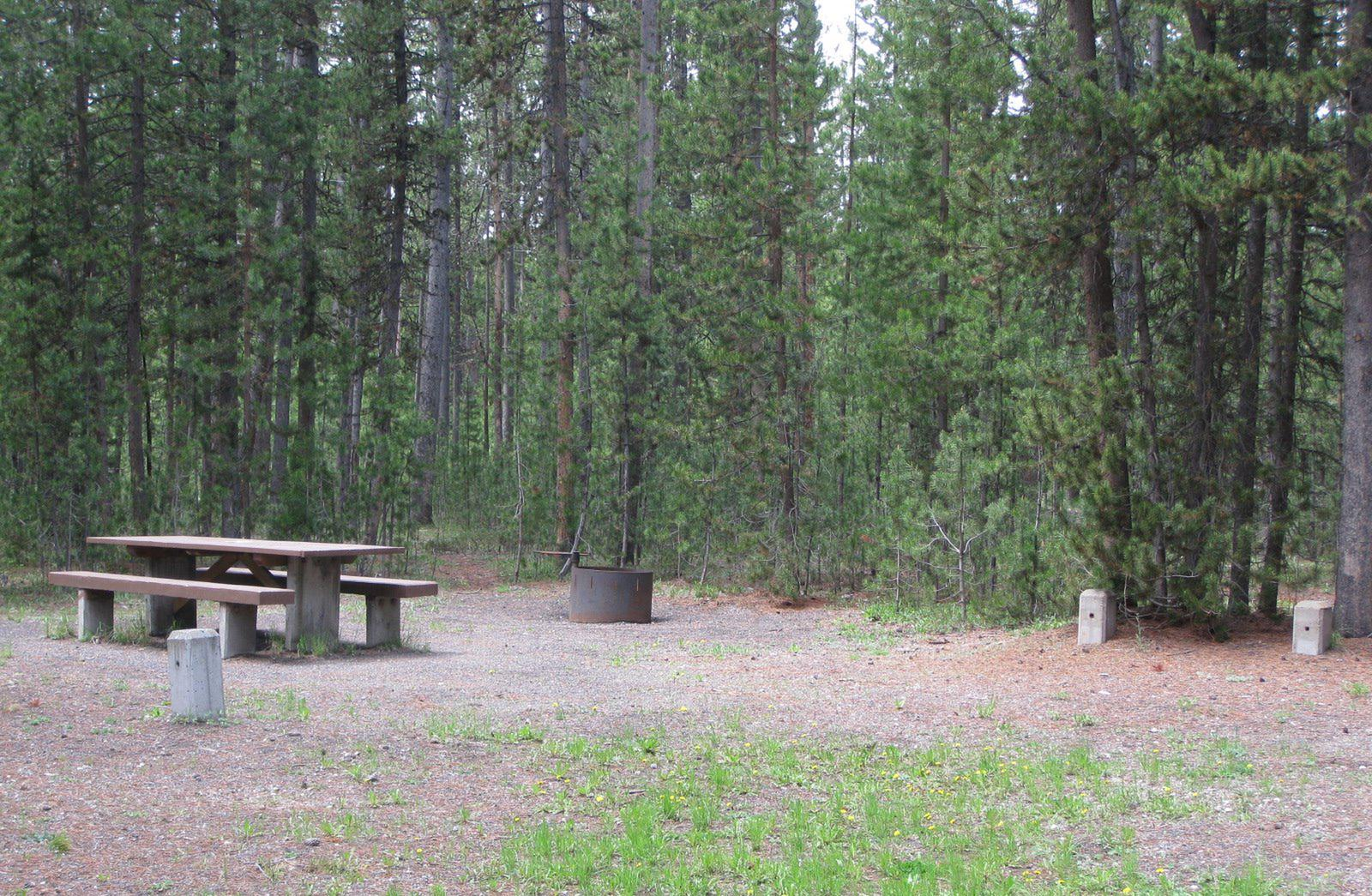 Site D7, surrounded by pine trees, picnic table & fire ringSite D7