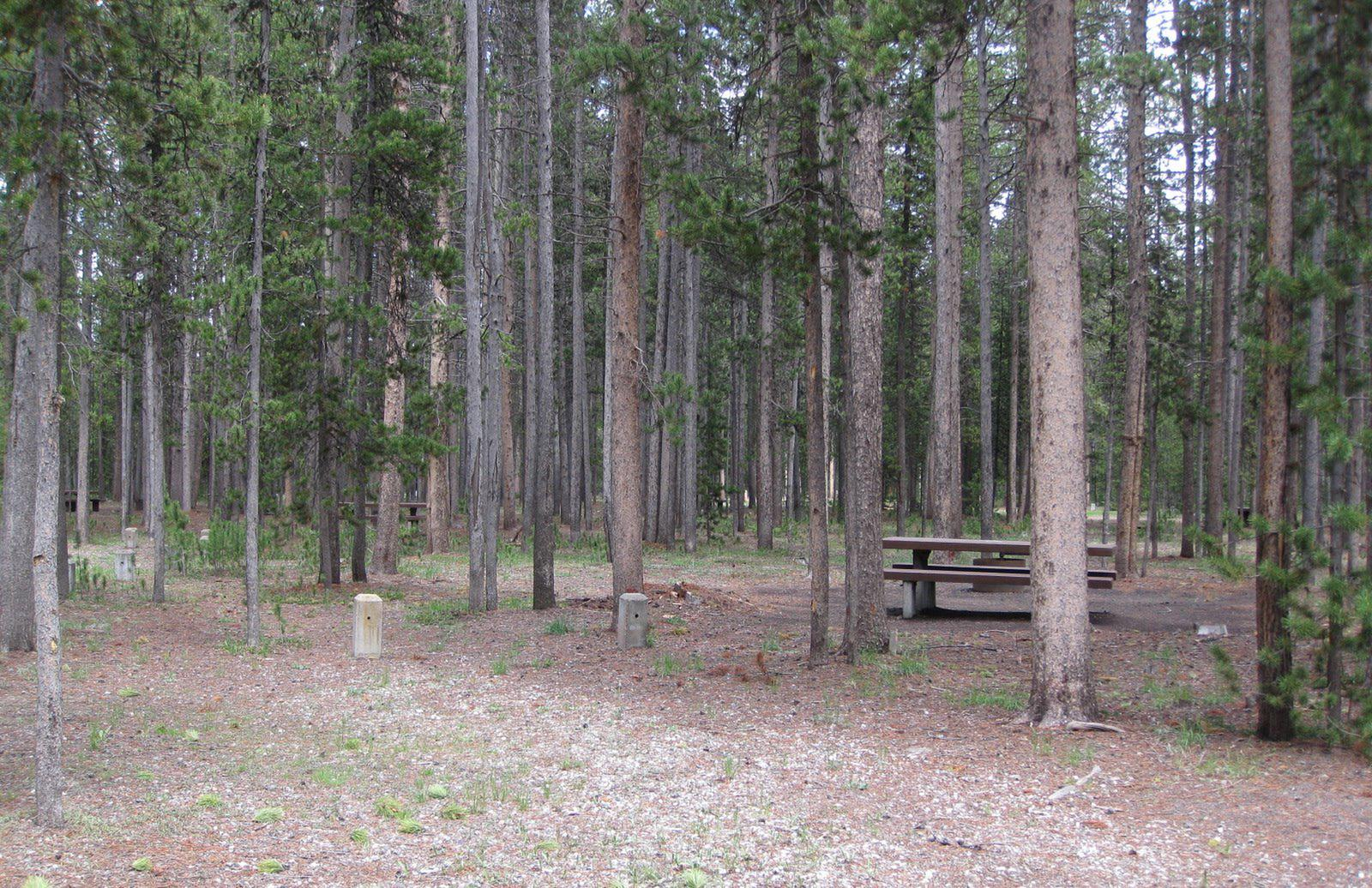 Site D8, surrounded by pine trees, picnic table & fire ringSite D8
