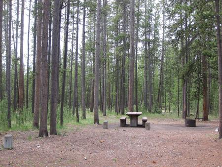 Site D9, surrounded by pine trees, picnic table & fire ringSite D9