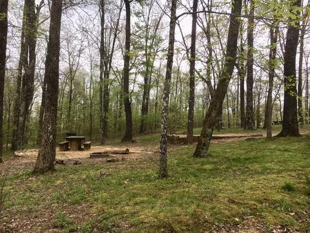 White Rock Mountain Campsite 4White Rock Mountain Campsite 4 in Spring