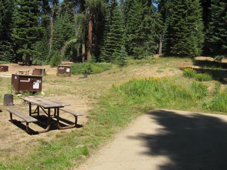Site 203, sunny, near meadow