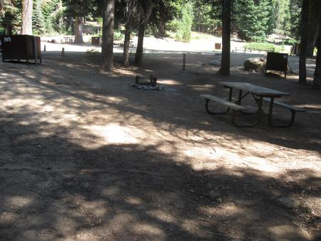 Site 195, partial shade, near creek and meadow